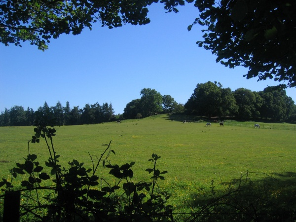 Across Pirbright's fields